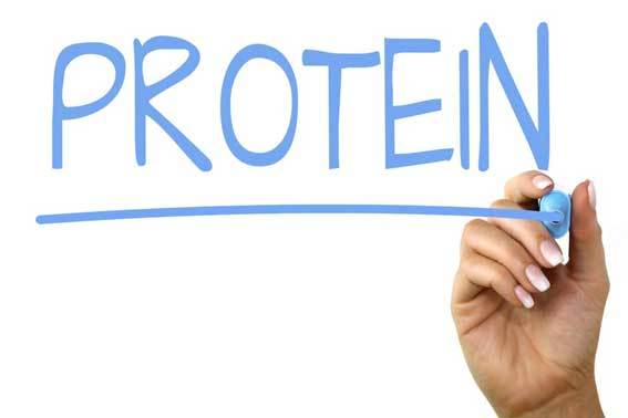 protein handwriting