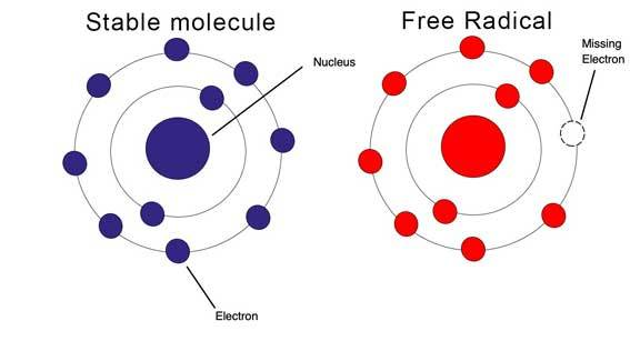 normal molecule and free radical