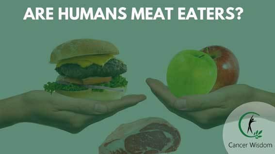 are humans herbivores