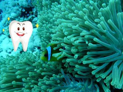 tooth in coral reef