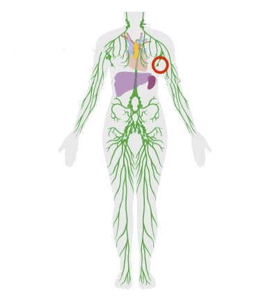 Axillary nodes