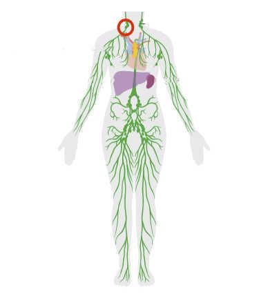 Cervical node