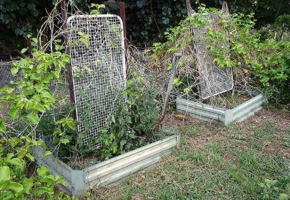 garden with weeds