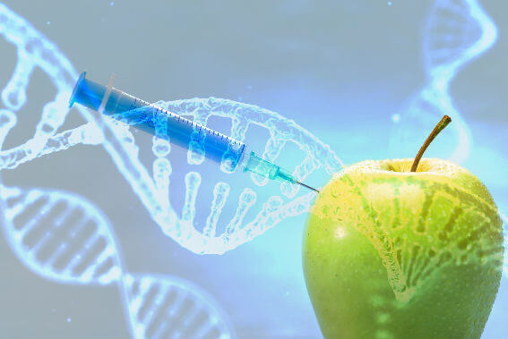 Needle manipulating the DNA of an apple