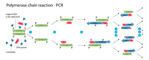 diagram of the pcr test