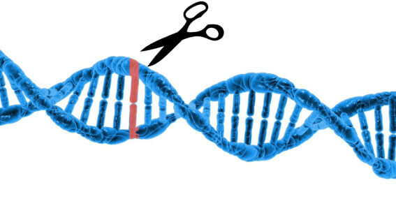 Scissor cutting DNA string