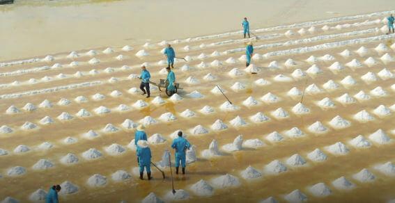 Workers collecting salt inYuncheng Salt lake